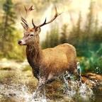 狩猎冲突中文版